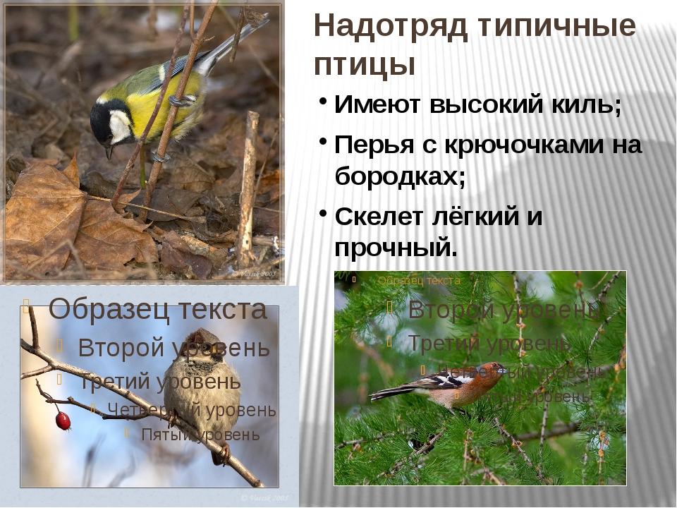 Надотряд типичные птицы Имеют высокий киль; Перья с крючочками на бородках; С...