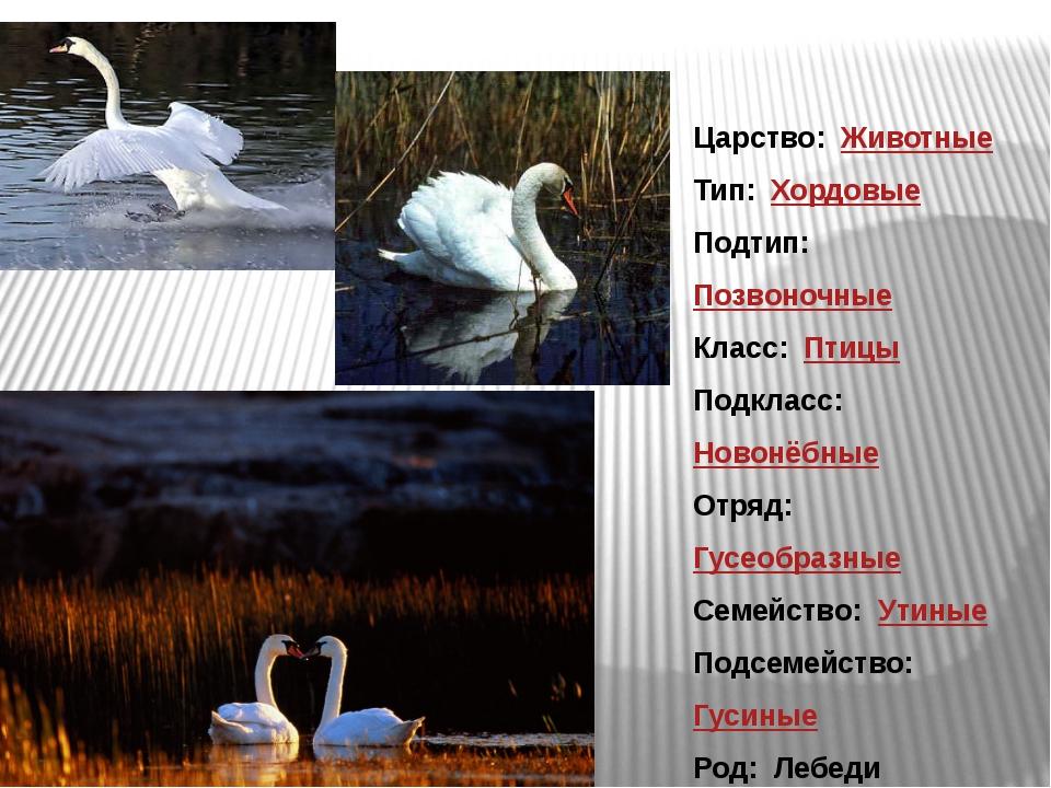 Царство: Животные Тип: Хордовые Подтип: Позвоночные Класс: Птицы Подкласс...