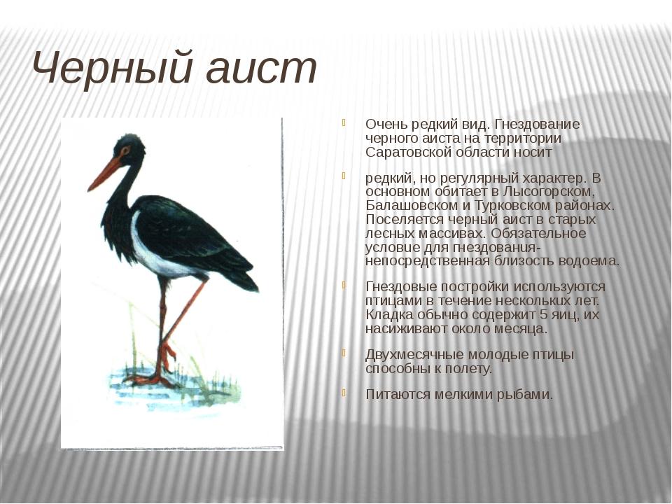 Черный аист Очень редкий вид. Гнездование черного аиста на территории Саратов...
