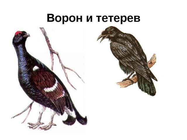 Ворон и тетерев