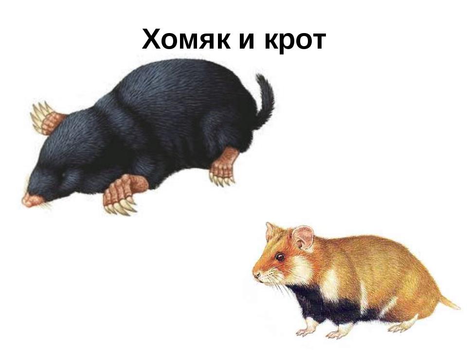 Хомяк и крот