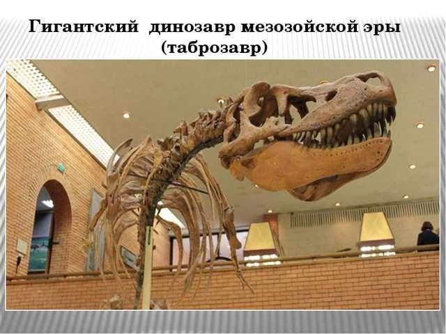 Гигантский динозавр мезозойской эры (таброзавр)