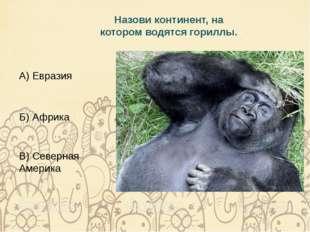 Назови континент, на котором водятся гориллы. А) Евразия Б) Африка В) Северна