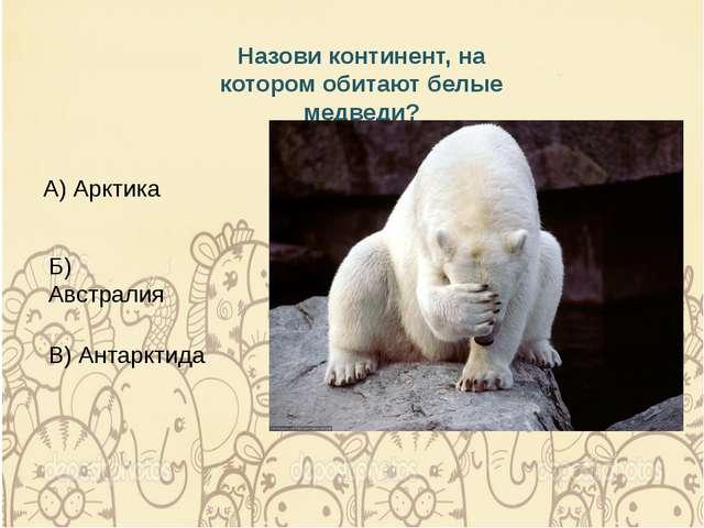 Назови континент, на котором обитают белые медведи? А) Арктика Б) Австралия В...