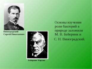 Основы изучения роли бактерий в природе заложили М. В. Бейеринк и С. Н. Вино