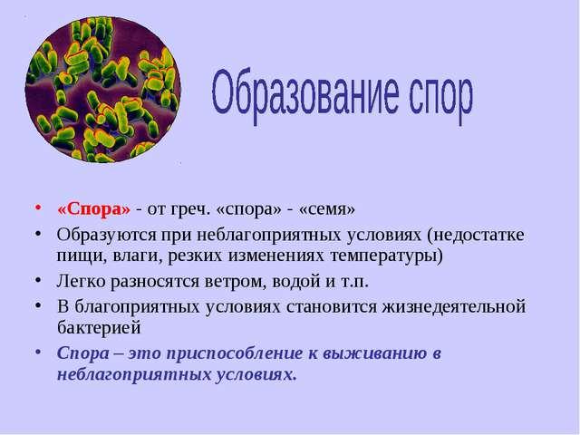 «Спора» - от греч. «спора» - «семя» Образуются при неблагоприятных условиях (...