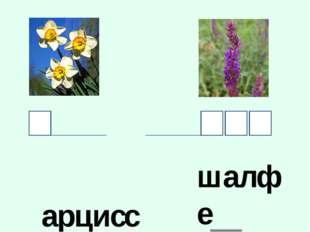 __арцисс шалфе__