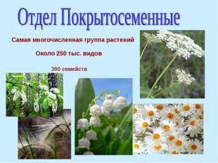 Самая многочисленная группа растений Около 250 тыс. видов 390 семейств