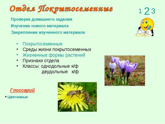 Покрытосеменные Среды жизни покрытосеменных Жизненные формы растений Признаки...