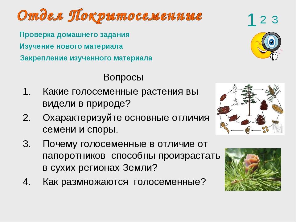 Проверка домашнего задания Вопросы Какие голосеменные растения вы видели в пр...