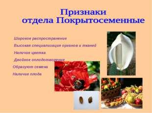 Широкое распространение Высокая специализация органов и тканей Наличие цветка