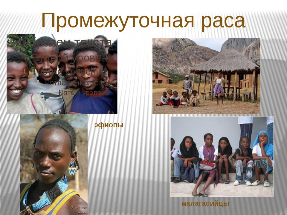 Промежуточная раса эфиопы малагасийцы