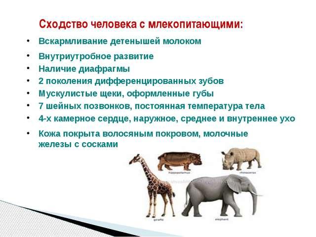 Сходство человека с млекопитающими: Вскармливание детенышей молоком Внутриутр...