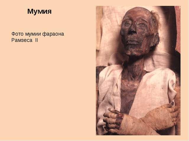 Мумия Фото мумии фараона Рамзеса II