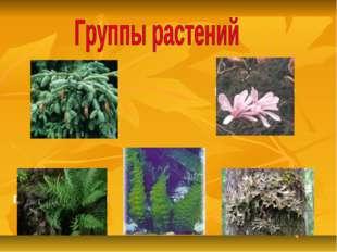 хвойные цветковые папоротники водоросли мхи