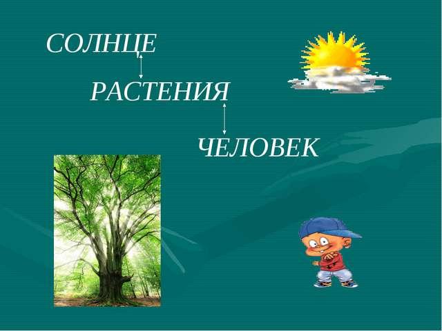СОЛНЦЕ РАСТЕНИЯ ЧЕЛОВЕК