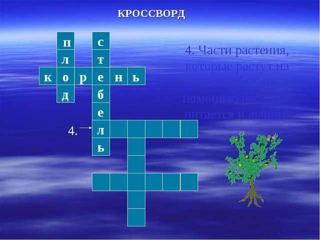 л о д к р е н ь т с б е л ь КРОССВОРД 4. Части растения, которые растут на по...