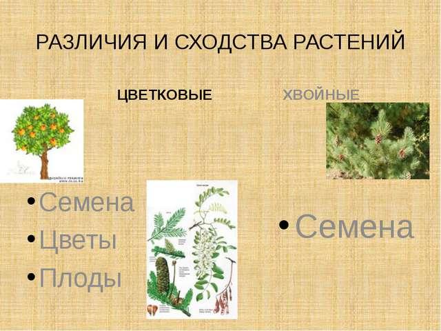 РАЗЛИЧИЯ И СХОДСТВА РАСТЕНИЙ ЦВЕТКОВЫЕ Семена Цветы Плоды ХВОЙНЫЕ Семена