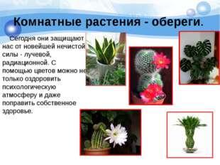 Комнатные растения - обереги. Сегодня они защищают нас от новейшей нечистой с