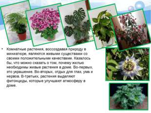 Комнатные растения, воссоздавая природу в миниатюре, являются живыми существа