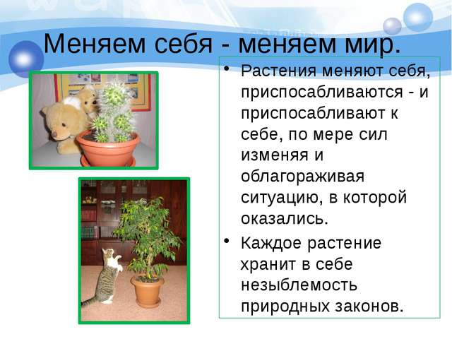 Меняем себя - меняем мир. Растения меняют себя, приспосабливаются - и приспос...