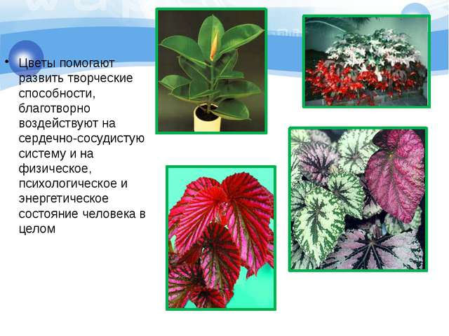 Цветы помогают развить творческие способности, благотворно воздействуют на се...