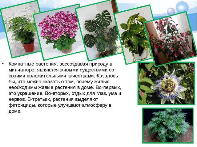 Комнатные растения, воссоздавая природу в миниатюре, являются живыми существа...
