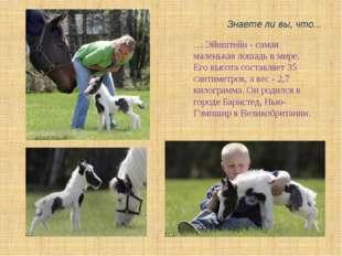 Знаете ли вы, что... … Эйнштейн - самая маленькая лошадь в мире. Его высота с
