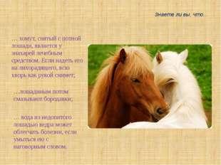 Знаете ли вы, что... … хомут, снятый с потной лошади, является у знахарей леч
