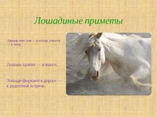 Лошади спят стоя — к холоду, ложатся — к теплу. Лошадиные приметы Лошади фырк