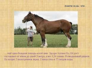 … ещё одна большая лошадь носит имя Эдгара Аллана По. Её рост составляет от з