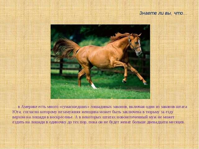… в Америке есть много «сумасшедших» лошадиных законов, включая один из закон...
