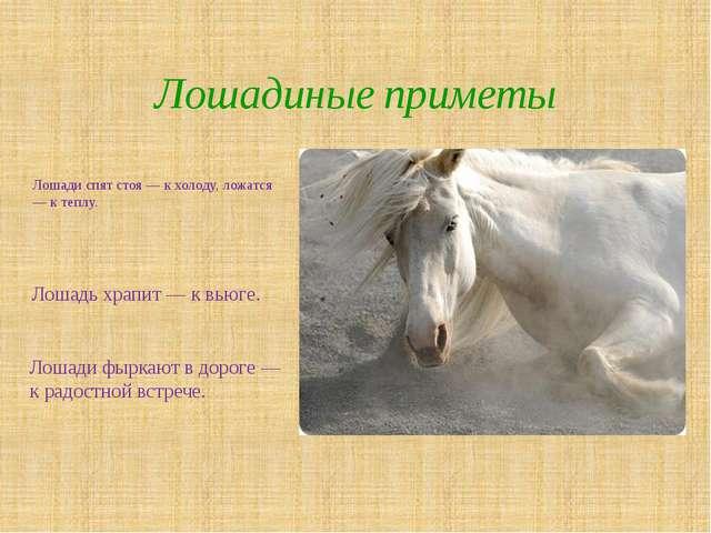 Лошади спят стоя — к холоду, ложатся — к теплу. Лошадиные приметы Лошади фырк...