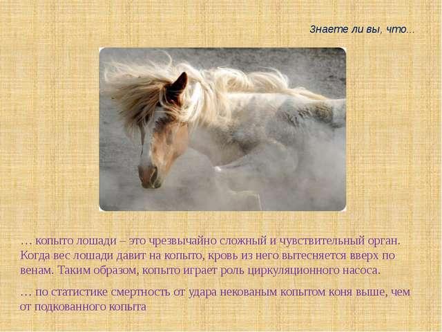… копыто лошади – это чрезвычайно сложный и чувствительный орган. Когда вес л...
