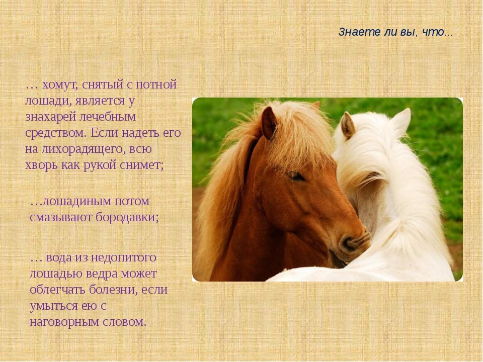 Знаете ли вы, что... … хомут, снятый с потной лошади, является у знахарей леч...