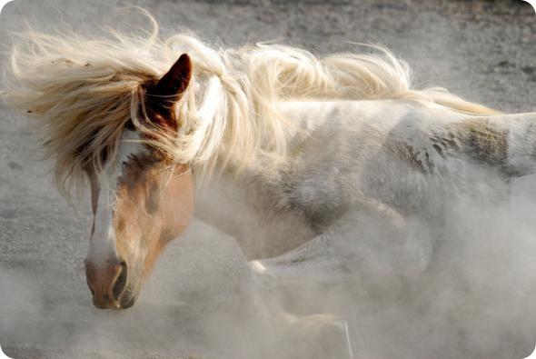 http://thebester.ru/uploads/images/00/60/57/2011/03/26/e416e17974.jpg