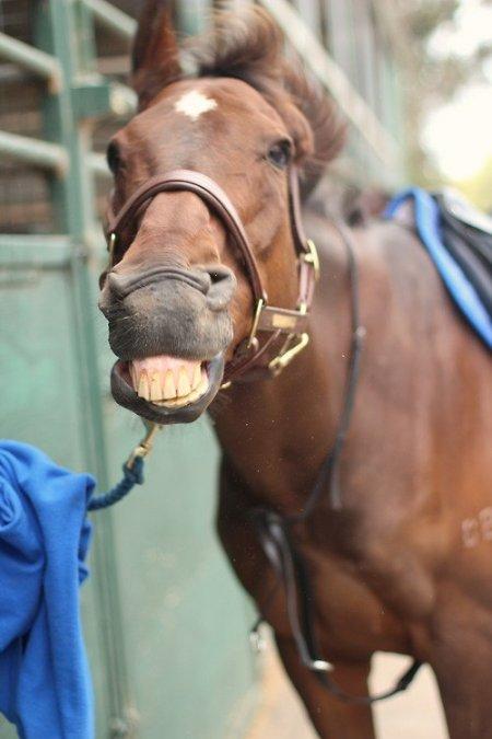 Фото лошади рыжей масти