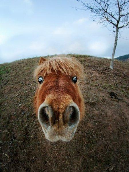 Фото пони рыжей масти