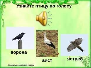 Узнайте птицу по голосу Кликнуть на картинку-отгадку Неверно! Верно! ворона Н