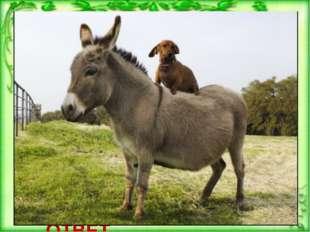 Каких животных завещал своим сыновьям крестьянин из сказки братьев Гримм «Тр