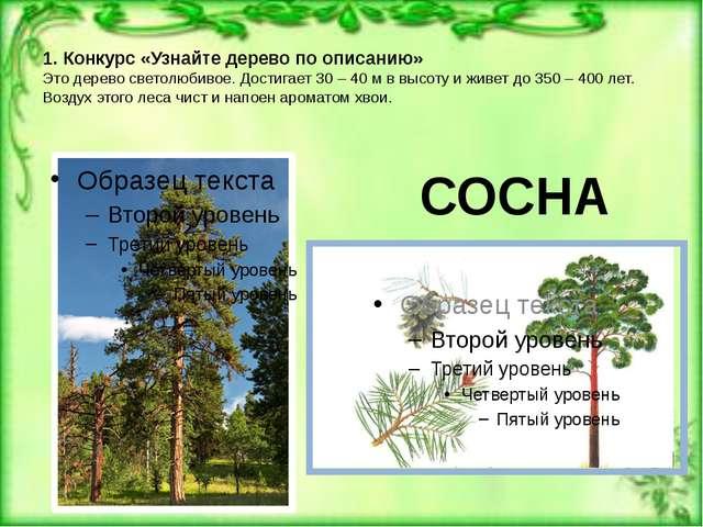 1. Конкурс «Узнайте дерево по описанию» Это дерево светолюбивое. Достигает 3...