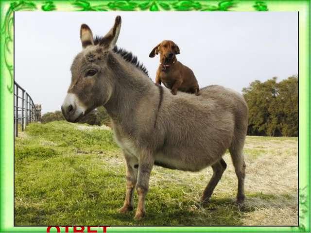 Каких животных завещал своим сыновьям крестьянин из сказки братьев Гримм «Тр...