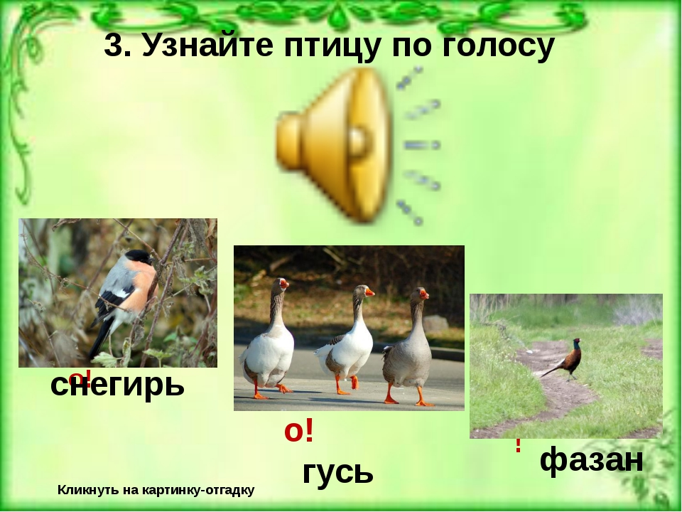 3. Узнайте птицу по голосу Кликнуть на картинку-отгадку Неверно! Верно! гусь...