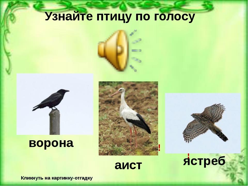 Узнайте птицу по голосу Кликнуть на картинку-отгадку Неверно! Верно! ворона Н...