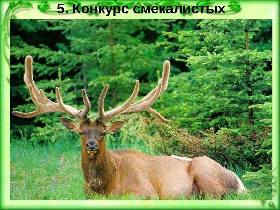 5. Конкурс смекалистых У этого животного, по словам Мюнхгаузена, на голове вы...