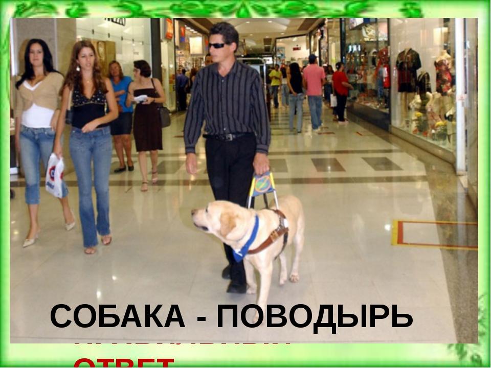 Как называются собаки, которые помогают своему слепому хозяину при передвижен...