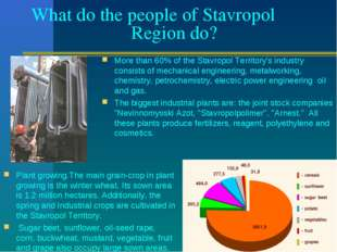 What do the people of Stavropol Region do? More than 60% of the Stavropol Ter