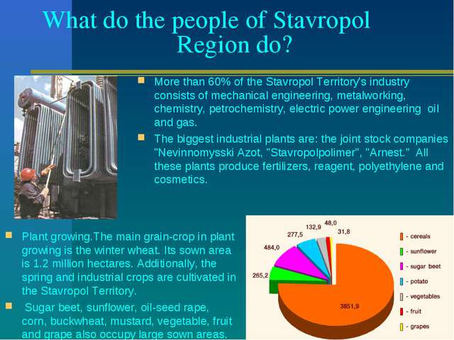 What do the people of Stavropol Region do? More than 60% of the Stavropol Ter...