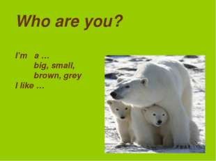 Who are you? I'm a … big, small, brown, grey I like …