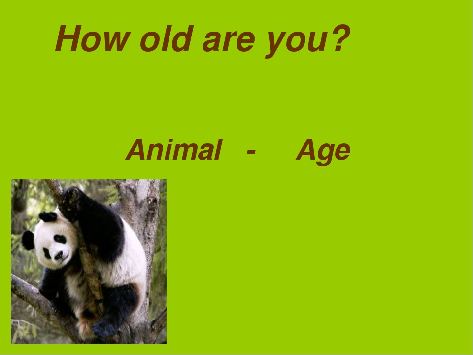 How old are you? Animal - Age